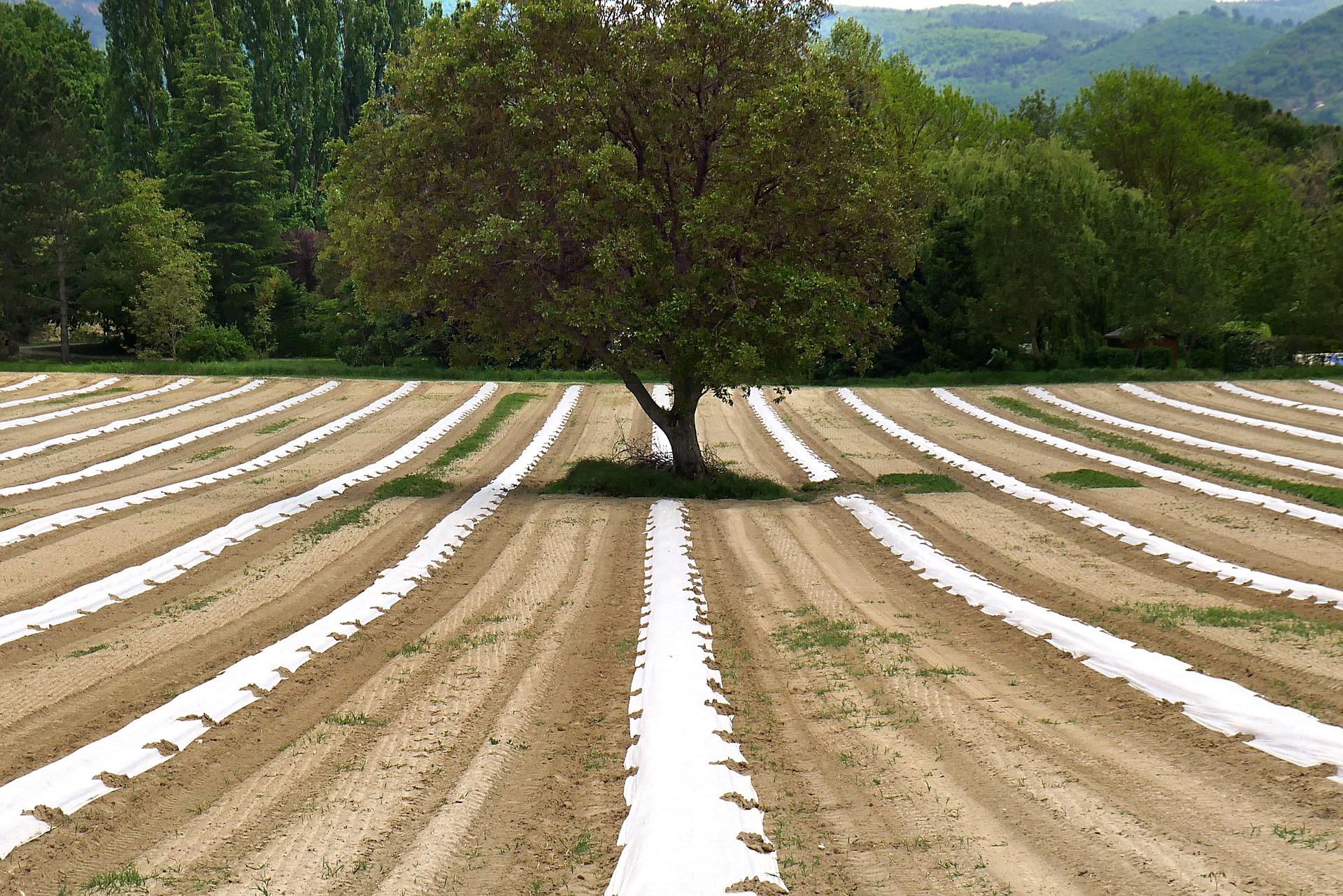Nieuwe inschrijvingen voor aanplantsubsidie agroforestry mogelijk tot 17 september